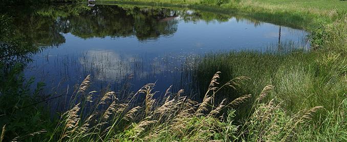 Take a stroll along the pond.